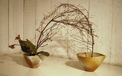 Ikebana 'Shake hands' (Otomodachi) Tags: flowers flower leaves ceramics ikebana branches container exposition bloemen flowerarrangement containers takken expositie bloem keramiek bladeren kangaroopaws zoeterwoude japaneseflowerarrangement bloemschikking zaalberg ichiyoschool schikking ikebanaexpositie ikebanaexposition jeroenvermaas kangoeroepootjes
