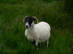 DSCN1863 (Zingraff) Tags: scotland glen dunkeld quaich