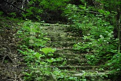 Mossy Stone Steps
