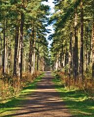 Woodland Walk (tricycledteenager) Tags: trees light scotland walks shadows fife path incrediblenature flickrstas