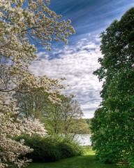 A View of Cold Spring Harbor (nosha) Tags: ny newyork flower tree nature beauty june harbor nikon 2008 d300 coldspringharbor cshl 18200mm nosha tonemapping