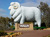 Wagin (yewenyi) Tags: 120 sign statue sheep balls australia merino wa testicles aus ram westernaustralia oceania highway120 wagin auspctagged goldenoutback greatsouthernhighway pc6315 giantsheep