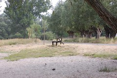 bench close to the river