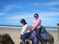 CIMG0316 (Queenbean79) Tags: beach camels portmacquarie