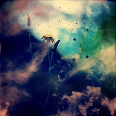 Air (batabidd) Tags: pink blue flower green clouds analog photoshop manipulated vintage holga lomo xpro lomography artistic digitalart creative surreal retro dandelion textures digitalpainting dreamy imaginary aire luft aria 120mm luismiranda thepottingshed  theawardtree batabidd fvdoubleexposure