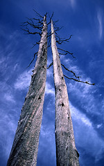 Twin Snags (justb) Tags: trees sky cloud mountain mountains tree film bc hiking branches twin peak jim bluesky velvia bark gnarly kelly fujifilm weathered coquihalla snags wispy gnarled snag tulameen justb