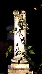 israelitischer Friedhof Konstanz (Manuela Salzinger) Tags: roses friedhof rose cemetary tomb rosen grab konstanz constance israelitisch israelitischer