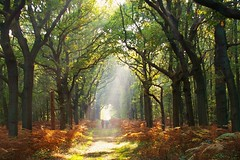One day last autumn (Johan_Leiden) Tags: autumn trees sun fall netherlands forest nederland thenetherlands rays heemstede soe afternoonsun sunray rayoflight golddragon mywinners superaplus aplusphoto goldstaraward onedaylastautumn hopetotakeoneofthesethisyeartoo