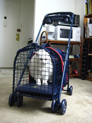 Pandora in Kittywalk Pet Stroller