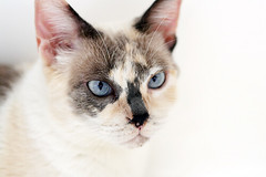 cats illness