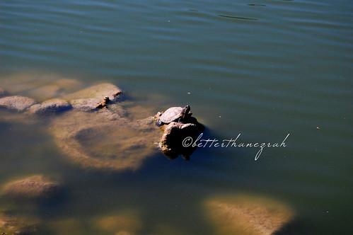 Lake Shrine 076