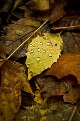 L'automne est arriv-1 (David Bishop Noriega) Tags: autumn david fall nature water automne agua eau otoo bishop noriega davidbishopnoriega dbishopn
