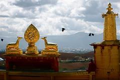松赞林寺 songtsam lama temple