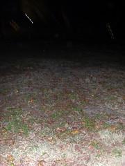 Dead grass (radPhotos) Tags: xmas fl stpete crescentlake