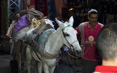 DSC_0232 (@nt.) Tags: marrakech souk djemaaelfna