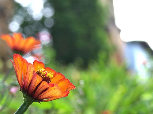 Catuaro a través de una flor