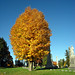 Oakwood Cemetery - Troy, NY - 16 by sebastien.barre