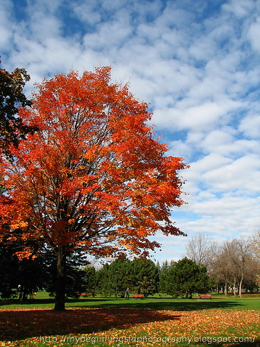 A fall landscape from the Parc Jarry in Montreal, Canada.