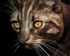 Magic II (Jacqueline Harte) Tags: cat feline magic dragan draganizer mywinners aplusphoto jacquelineharte