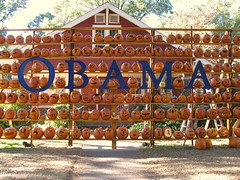 Pumpkin wall (Doxieone) Tags: orange fall halloween wall pumpkin carved elizabeth charlotte president pumpkins northcarolina carolina 2008 democrats obama pumpkinwallset2008 halloweenfall2008set