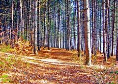 An Autumn Walk (star_cosmos_bleu) Tags: autumn trees light colors naturesfinest blueribbonwinner artisticexpression supershot anawesomeshot citritbestofyours onlythebestare damniwishidtakenthat