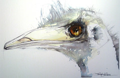 portrait of an emu (Jennifer Kraska) Tags: art birds pen watercolor jennifer emu ballpoint kraska