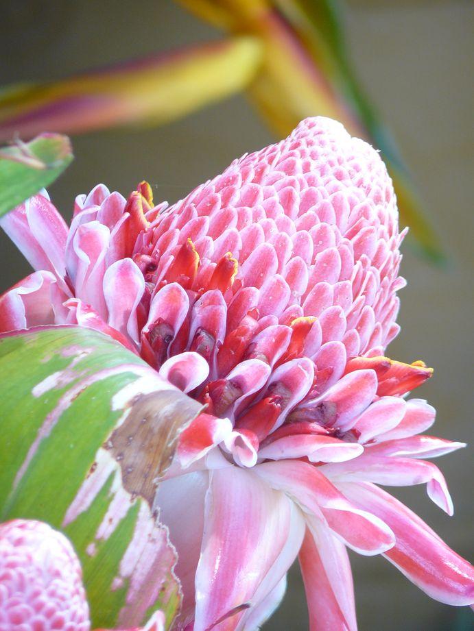 Ca flore
