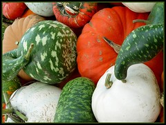 DSC03701adj Pumpkins and Squashes and Gourds, Oh My! (ftoomschb) Tags: autumn food orange white green fall colors gourds patterns sony pumpkins harvest cybershot squash organic dscf707 vanagram