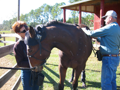 Equine Electromagnetic therapy