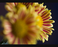undecided:  long photo (helen sotiriadis) Tags: camera new light favorite flower color macro art beautiful closeup canon wow lens fun happy photography video cool interesting fantastic funny colorful flickr pretty published shot angle very bokeh good album gorgeous awesome award superior super pop best most winner stunning excellent format much popular incredible ultra breathtaking exciting phenomenal hbw canonef100mmf28macrousm aplusphoto canoneos40d toomanytribbles