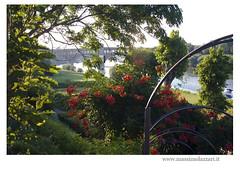"""Pavia """"ponte coperto"""" (Foto Massimo Lazzari) Tags: ticino fiori pontevecchio pavia"""