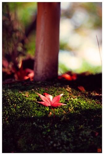 Moss & Leaf  081209 #02