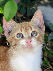 Sweetness... (zio paperino) Tags: italy nature cat geotagged lumix kitten kat chat kitty natura gatos panasonic gatto calabria fz50 naturesfinest abigfave aplusphoto ziopaperino mygearandme mygearandmepremium mygearandmesilver mygearandmegold