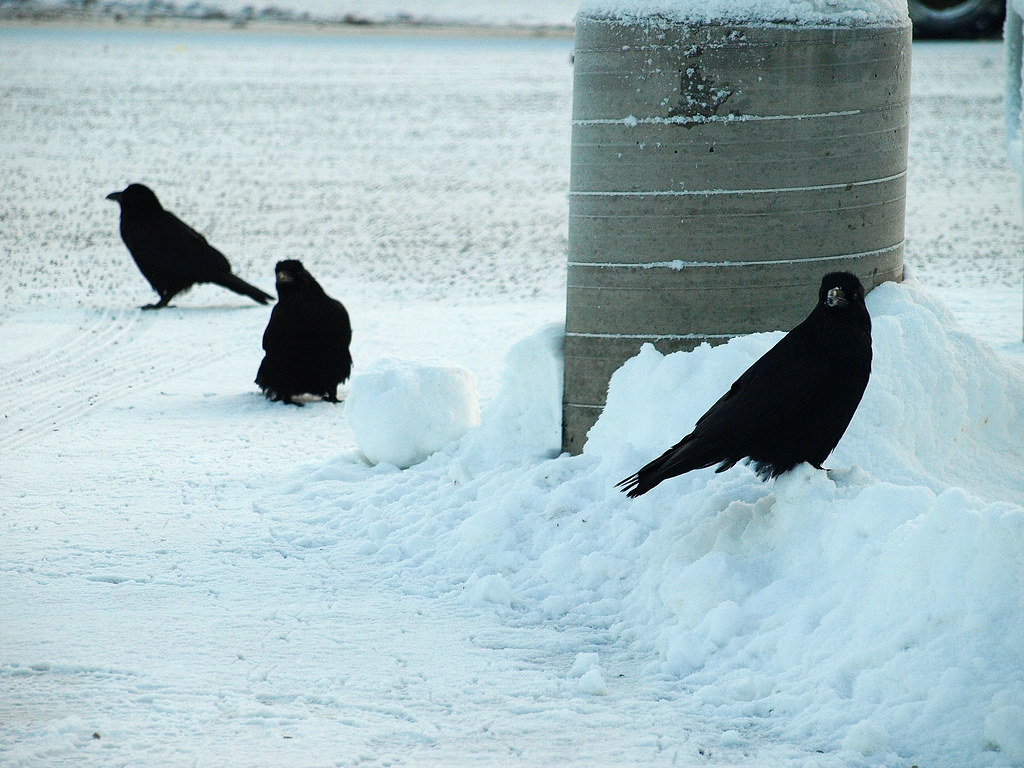 Ravens at Target