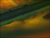 (ccarriconde) Tags: brazil macro verde green leaves yellow brasil leaf bananeira ccarriconde cristinacarriconde amarelo folha folhadebananeira copyright©cristinacarricondeallrightsreserved ©cristinacarriconde