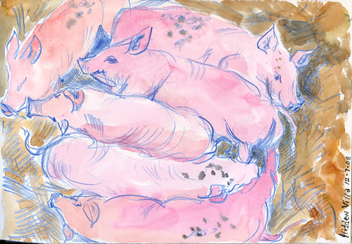 Hidden Villa: new piglets - group view