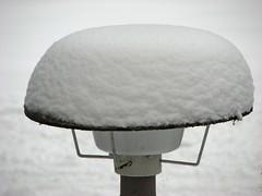 Albino shtreimel (GustavoG) Tags: winter light white snow cold hat path entrance covered albino shtreimel