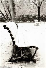 Nevicata di fine anno 3 (Monica M. ) Tags: winter parco white snow cold ice nikon neve inverno bianco freddo nevicata benk forl panchina giardinipubblici d80 primasupercontest monicamongelli