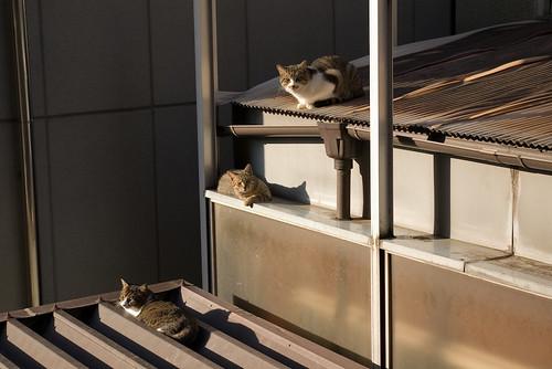 Cat_2008-12-30