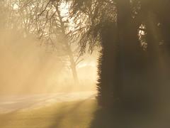 Rays of Light (dutchman122) Tags: winter orange sun sunlight mist snow tree nature netherlands fog gold bomen december ray foggy sunny boom finepix fujifilm rays geel yello shiningthrough bussum s700 oranje goud fogandrain dreamscametrue citritbestofyours s5700 landscapesoftheworld bestofsunlight photographersgonewild dutchman122 geniusmindphotography