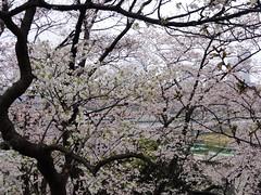 多摩川台公園+桜坂