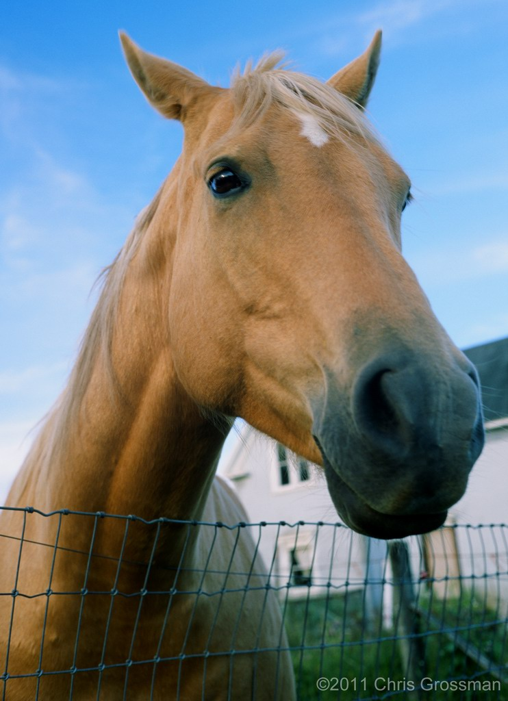 Friendly Horse For Sale - Point Arena, Mendocino County, California - Olympus 35SP - Velvia 50