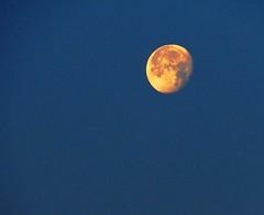 The Three Quarters Moon (asis k. chatt) Tags: moon nature naturephotography naturalharmony naturewatcher excapture internationalgeographic