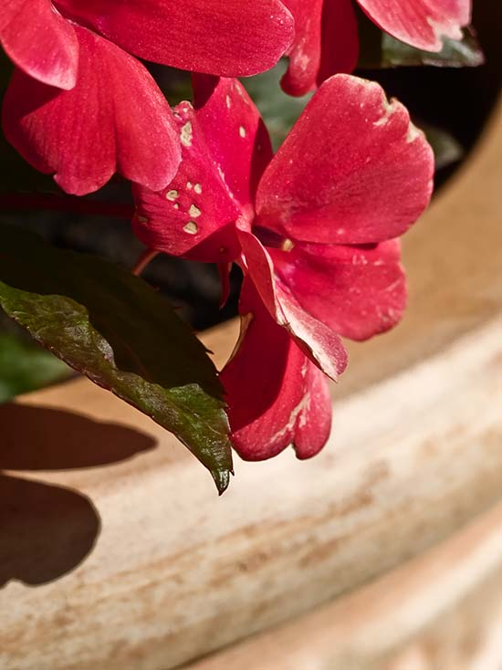 Photography - Flower Pot by Nicholas M Vivian