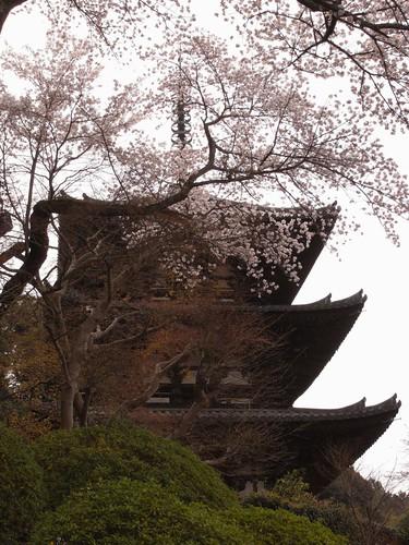 当麻寺(桜)-12