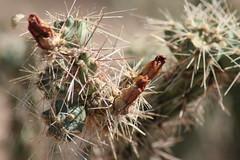 IMG_0755 (quinn.anya) Tags: arizona cactus saguaronationalpark