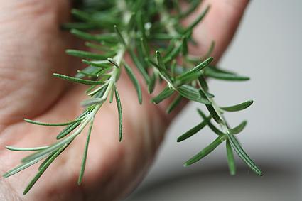 handfulrosemary