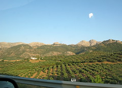 Los campos de mi Andalucia al atardecer (Micheo) Tags: andalucia olivares olivos verano summer paisaje landscape drivebyshoot olivegroves olives aceitunas cortijo olivar montañas