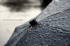 (SaraCrowe?!) Tags: umbrella real day under boring explore rainy raindrops
