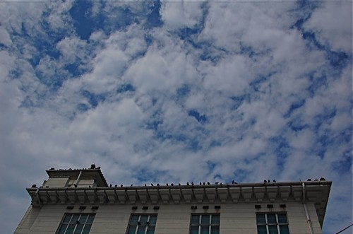 clouds and birds